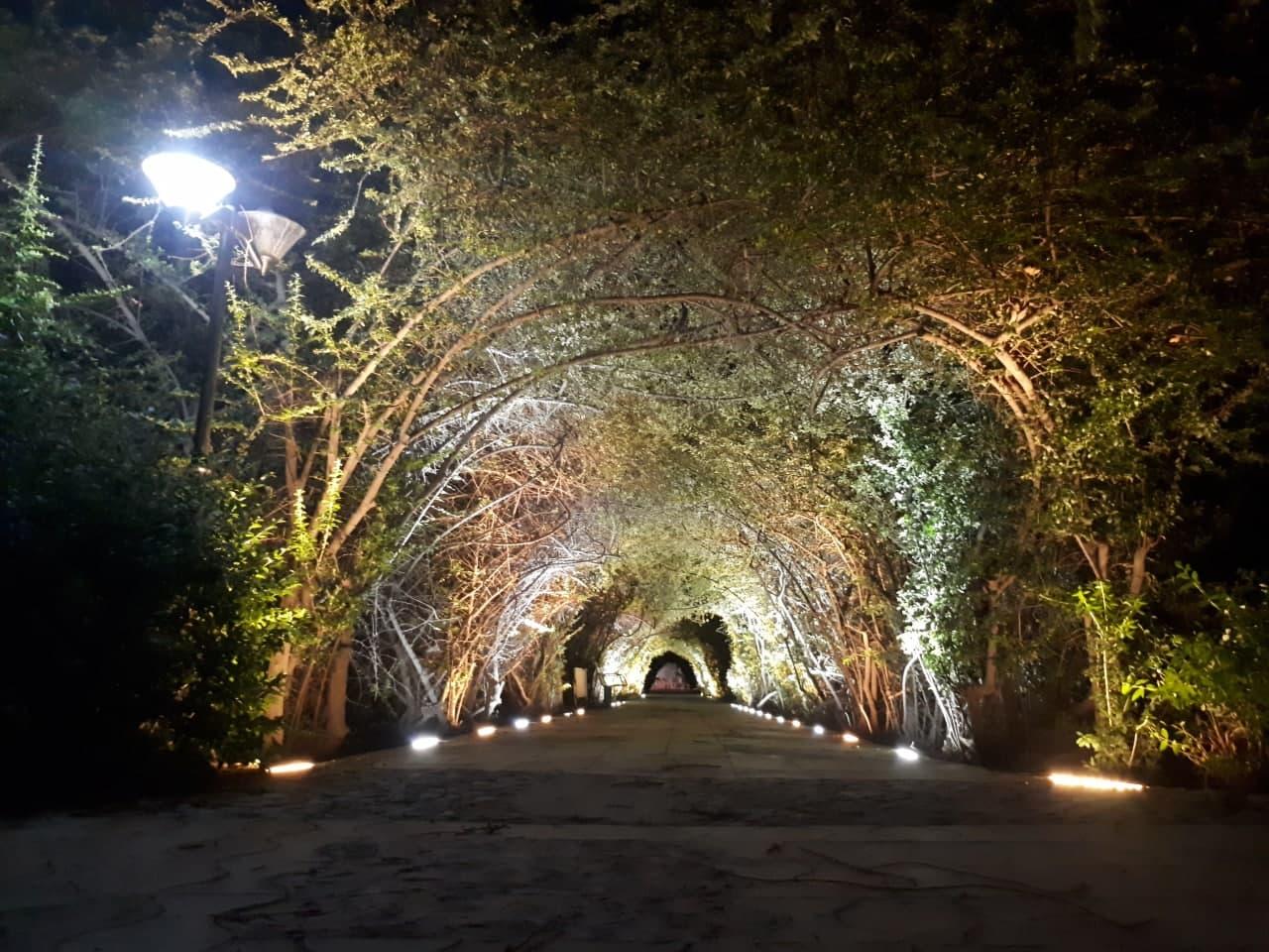 نورپردازی و تقویت روشنایی پارک زیبای باغ گل